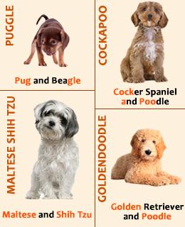 Funny Hybrid Dog Names Y Dog Names