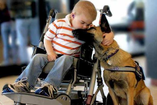 child-with-german-shepherd-wheelchair