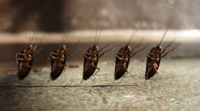 cockroaches-495x278