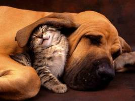 25988,xcitefun-cats-dogs-8
