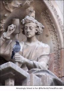 Powdered pigeon