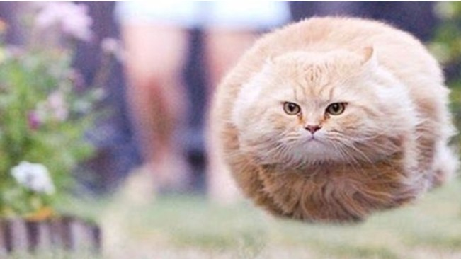 Cat Zeppelin