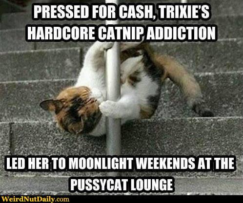 trixies catnip addiction?w=407&h=341 catness mitch teemley