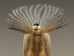 Fly Larva