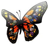 Philman401-Butterfly-Effect