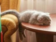 cat-sleeping-on-table-cute-cats-sleeping-photos-600x450