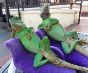lounge_lizards_t