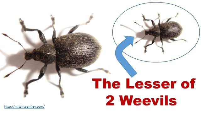 Two Weevils