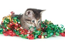 kitten-eating-ribbon-by-tony-campbell
