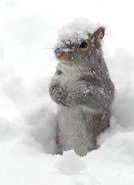 """Beauty schmeauty!"" Actually, the squirrels in our yard must enjoy the snow. They romp endlessly in it."