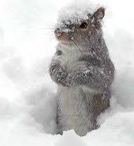 """""""Beauty schmeauty!"""" Actually, the squirrels in our yard must enjoy the snow. They romp endlessly in it."""