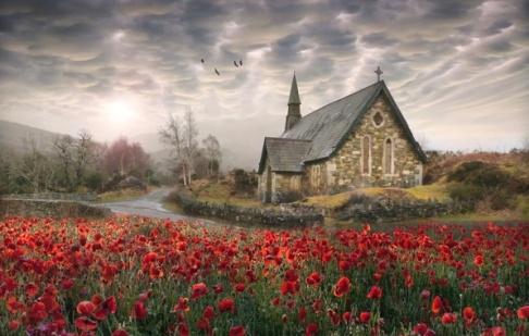 ireland-poppies-maki-cerkov