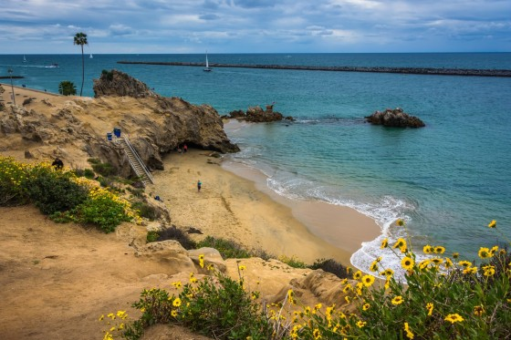 Yellow Flowers And View Of A Beach In Corona Del Mar, California