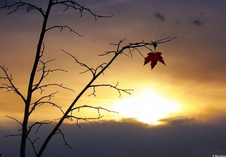Fall-last leaf