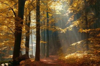 Fall-peak