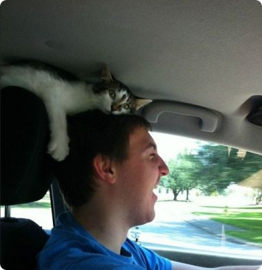 kitten-car-drive-on-head-of-driver-no-respect-for-personal-space-r-default