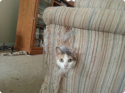 kitty-destroyed-armchair-r-default