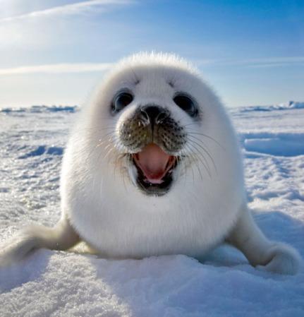 animal-baby-cute-happy-photography-Favim.com-424946