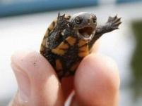 happy-baby-turtle-is-happy