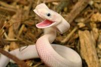 happy-snake-baby