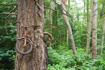 A bicycle inside a tree on Vashon Island, Washington.