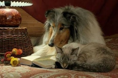 cat-sleeping-dog-reading