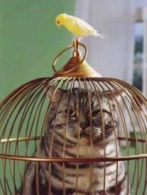 4Cat in Cage