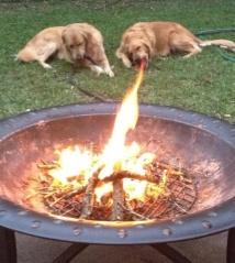5Fire-breathing dog