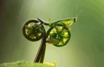 8Motorcyle mantis