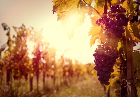 bigstock-autumn-harvest-53548378
