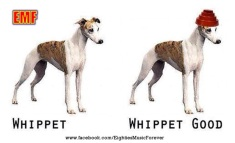It's not too late...to whippet good.