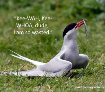 kee-wah