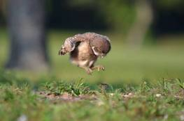 404785-baby-farm-animals-barn-owlet-jumping-on-lunch