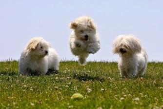 cute-3-animals-4