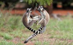 these_funny_animals_557_640_35