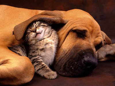 cat-dog-love-5