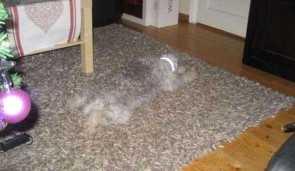 Carpetpet