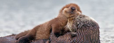 Happy Critters 2 - otterly contented
