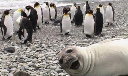 Sealfie