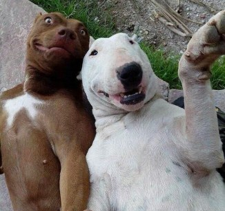 Selfie with a friend4