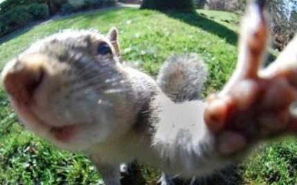 Squirrelfie