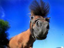 A horsey hello.