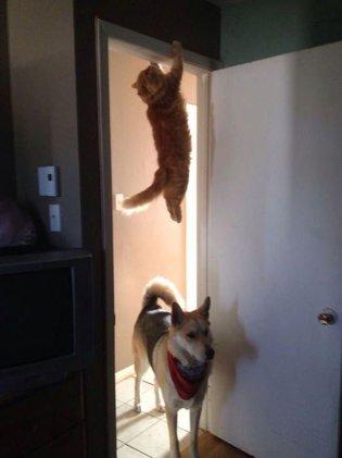 """""""Cat? What cat?"""""""