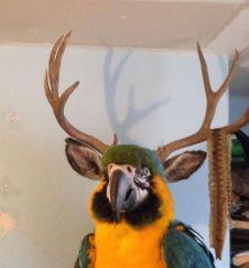 Birdalope?