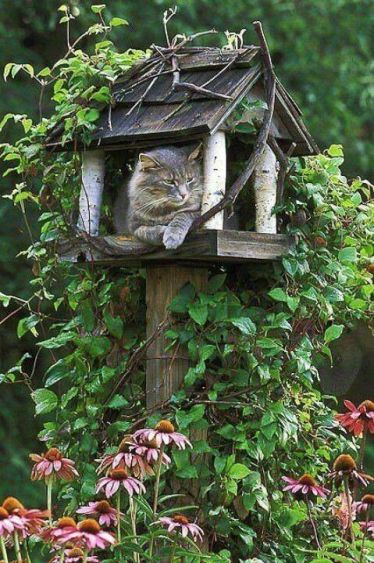 The purrfect thinking place.