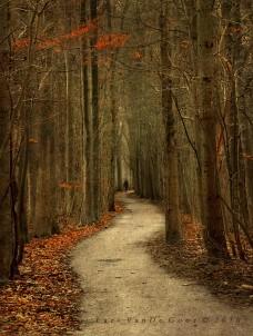 Autumn woods (Lars van de Goor)