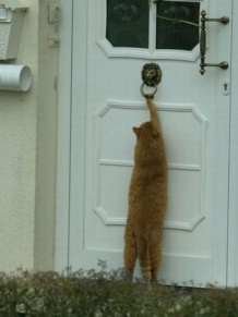 Cat-knocking-on-the-door
