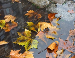 Drowned leaves