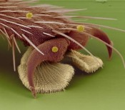 A housefly's foot