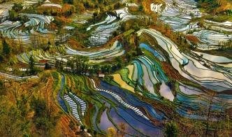 Rice paddies 1